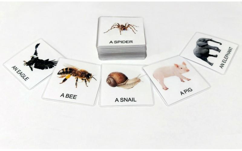 Živali sveta v angleškem jeziku z A / AN