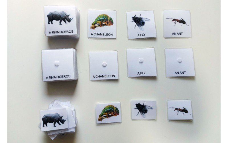 Tridelne kartice živali sveta v angleškem jeziku